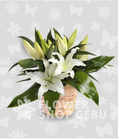 Basket of 1 Dozen White Lilies